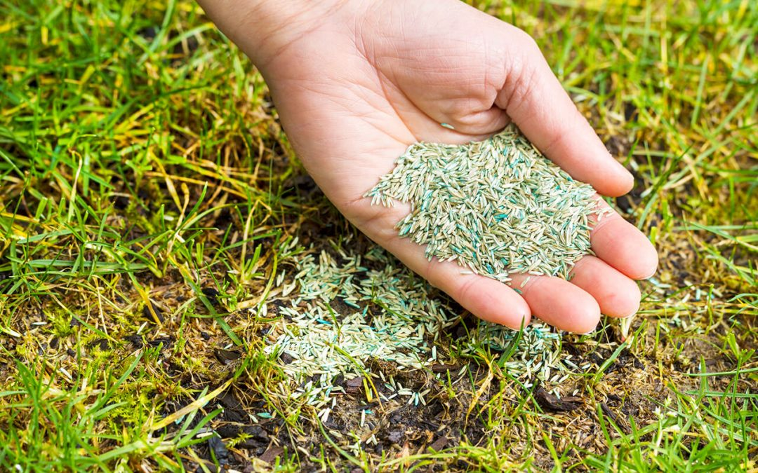 6 Spring Lawn Care Tips