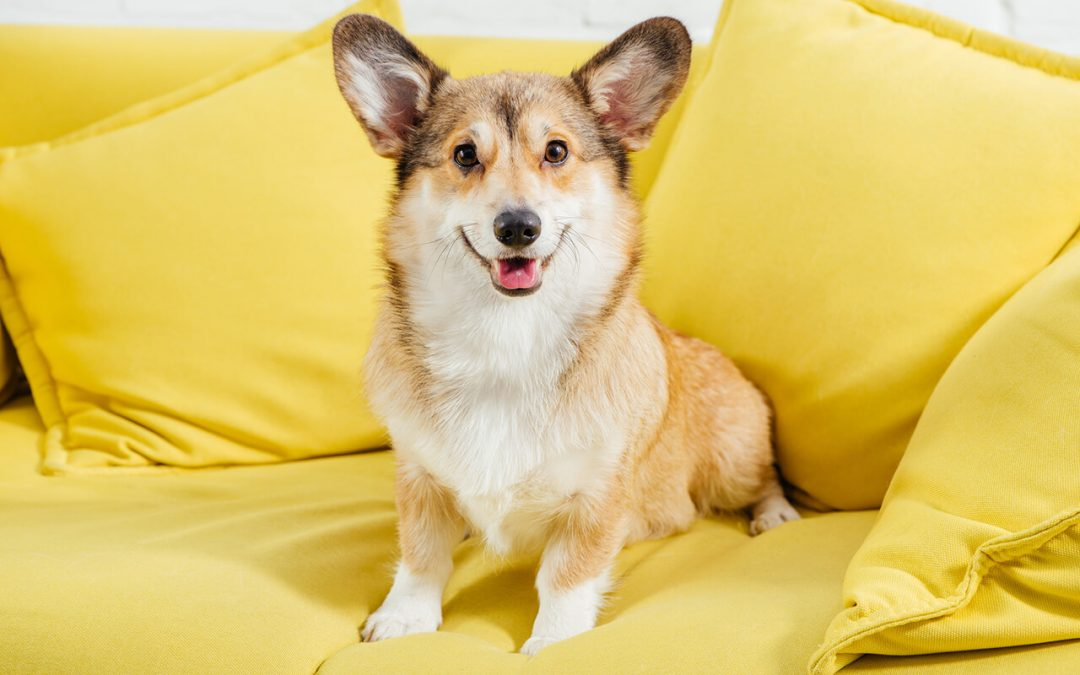 6 Home Cleaning Tips for Pet Owners