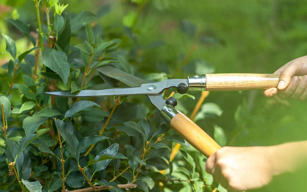 5 Spring Home Maintenance Tasks